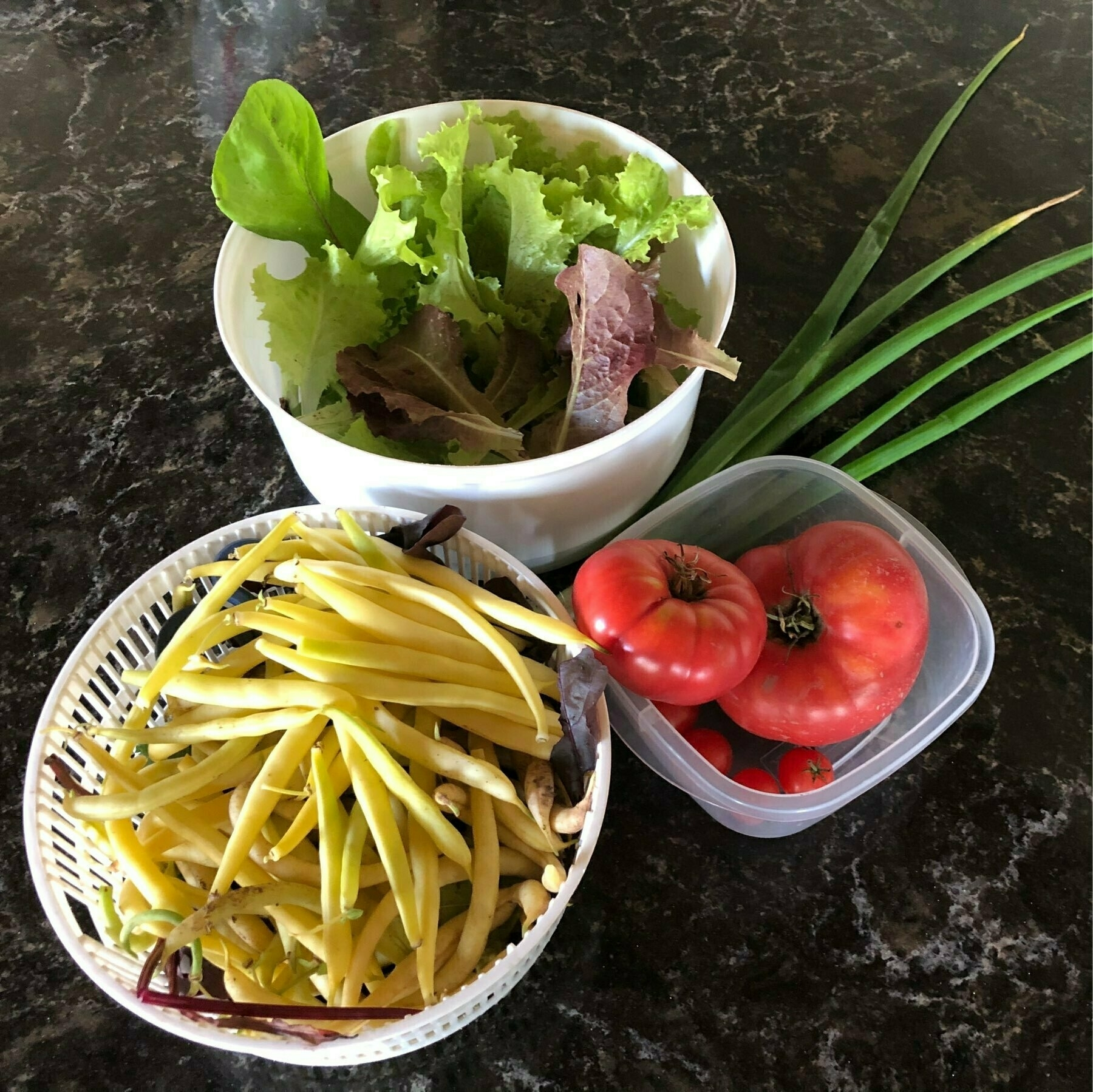 comtainers of yellow beans, tomatoes a d lettuce with green tops from walking onions sitting on a countertop
